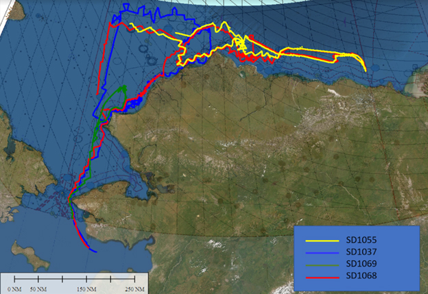 Overview graphic showing the navigation tracks of all four saildrones during the nearly two-month deployment as part of the North Slope Arctic mapping mission.